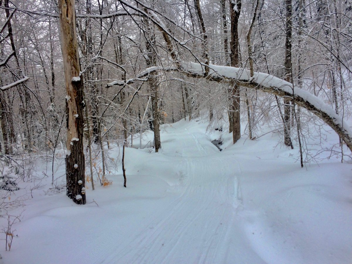 Snowy Waite's Loop Trail